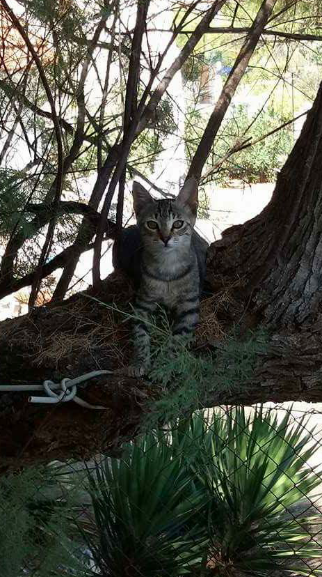 Our stray cat Peggy